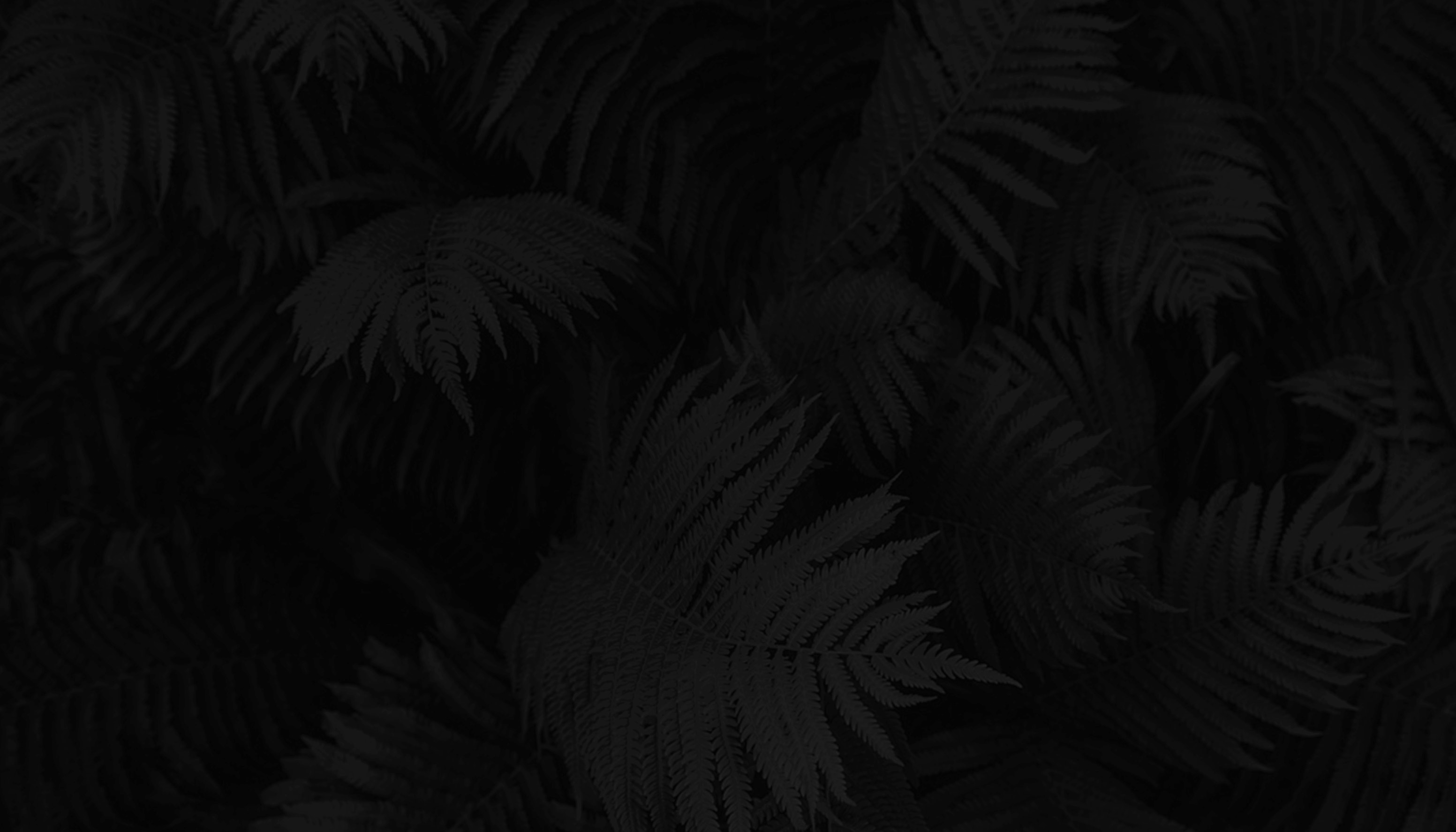 new-ferns